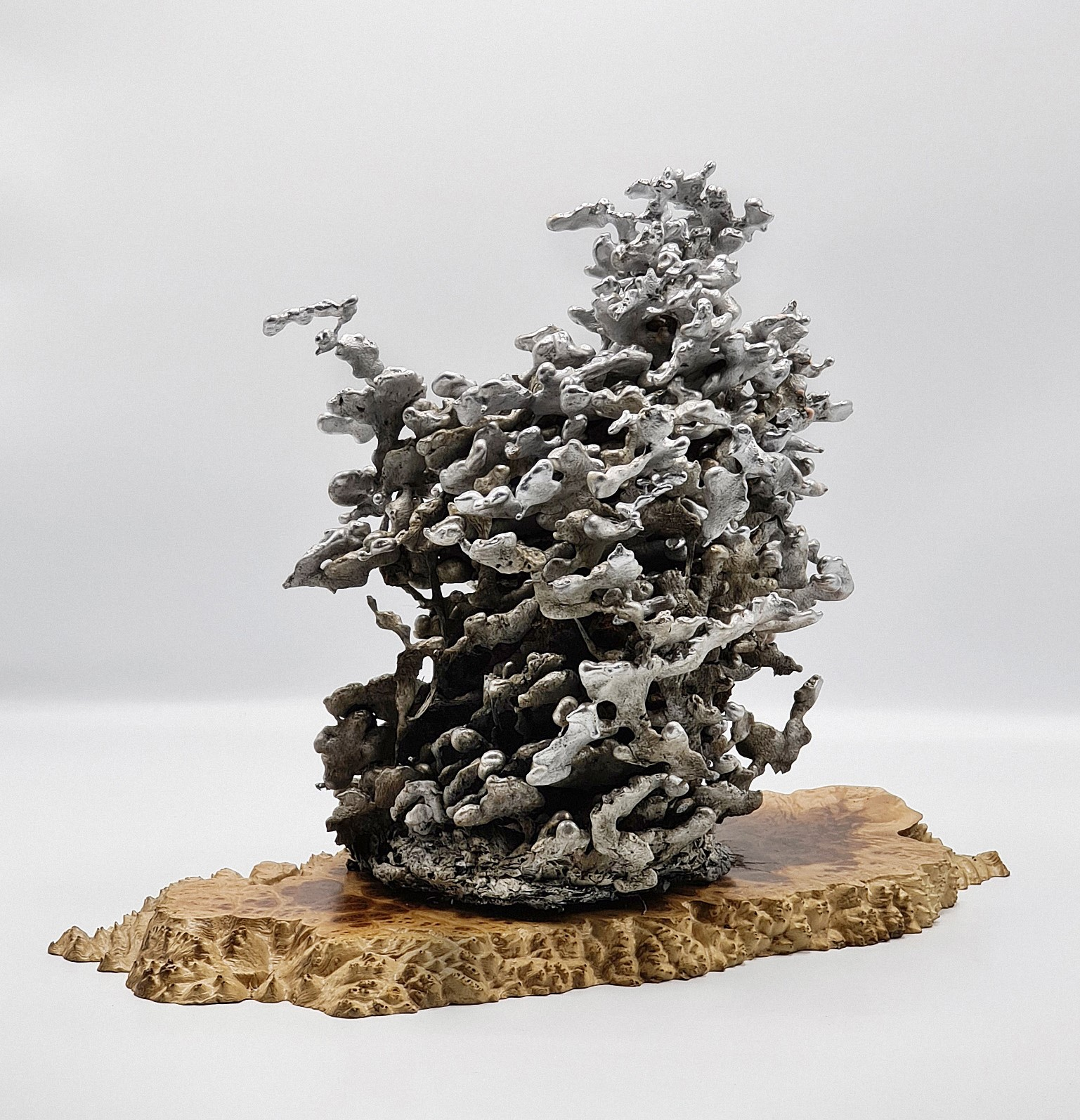 Casting with Nature I - Termites by Paul Fontanini v1